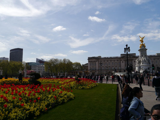 Tulpen links und Victoria Memorial vor dem Buckingham Palace