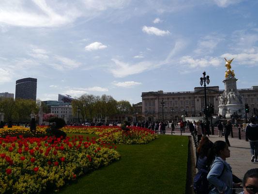 Tulpen links und Victoria Memorial vor dem Buckingham Palace