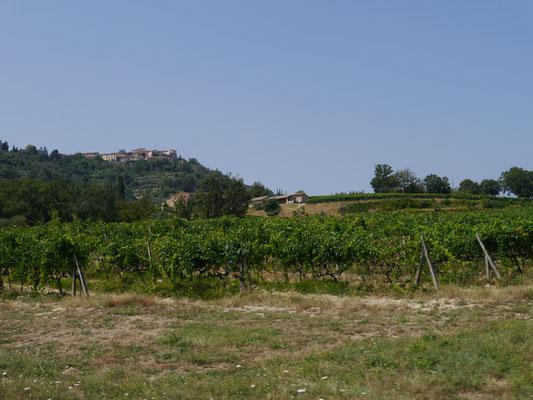 Montalcino oben auf dem Berg