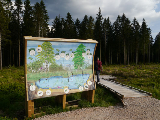 Fauna und Flora des Moores