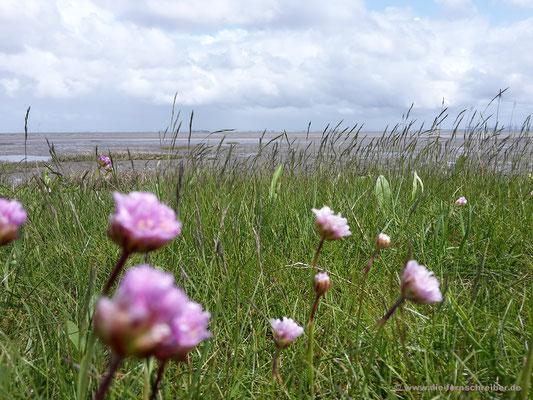 Strand-Grasnelken vor weitem Horizont