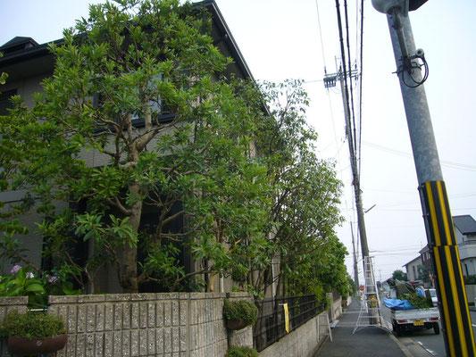 植木の剪定作業後 奈良県北葛城郡広陵町