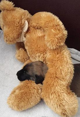 ... und Teddy - wenn Mami mal frei hat :-)