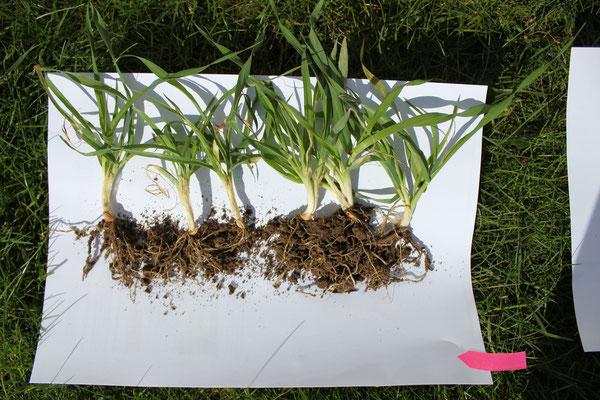 Komposttee + Bioaktiv