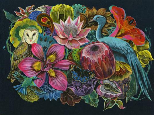 "Olaf Hajek, Limited Edition Print ""South African Flora & Fauna"""