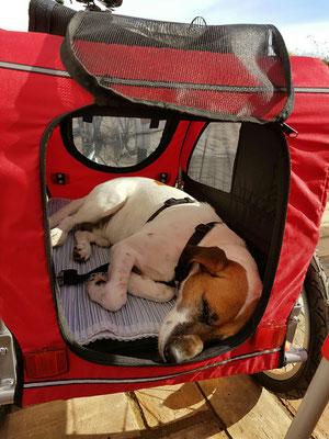 - Chico beim Mittagsschlaf