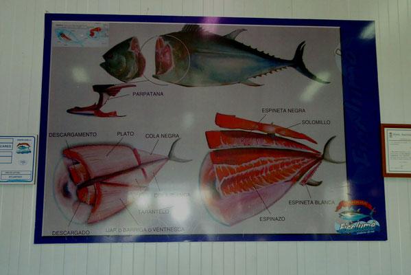 - die einzelnen Teile des Thunfisches
