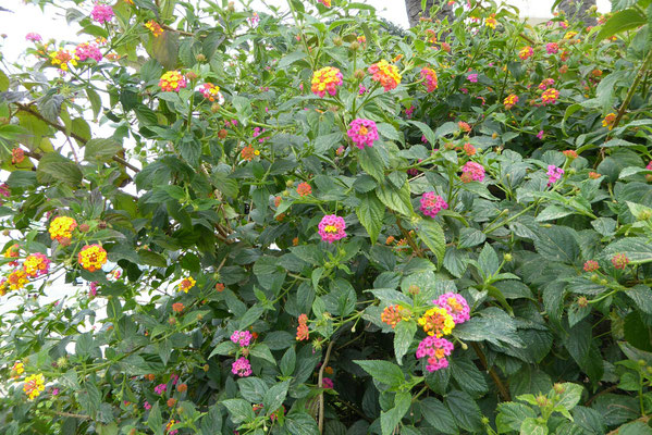 - eine Pflanze, aber viele Farben