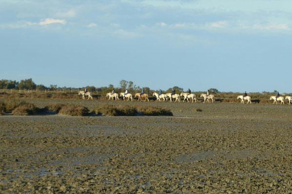 Reitergruppe in der Carmargue