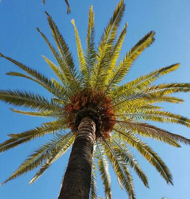 - unter Palmen läßt es sich gut leben