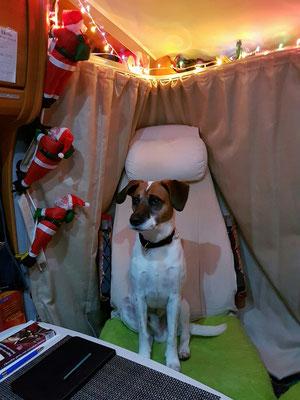 - der Nikolaus war zu Besuch