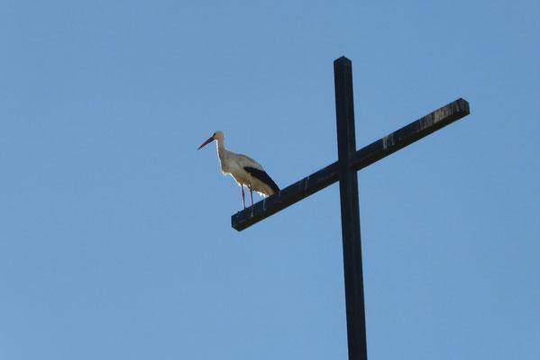 - ein sehr schöner Vogel