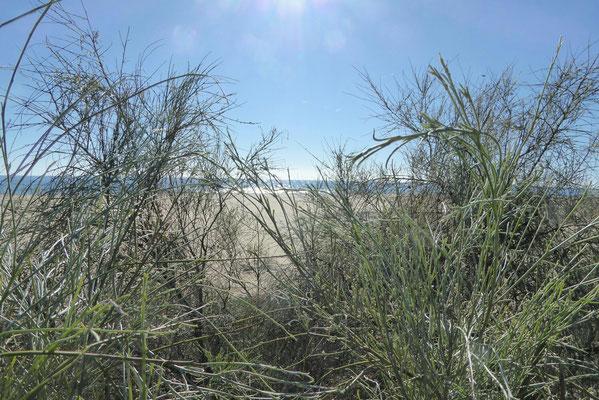 - Costa de la Luz (Küste des Lichts)