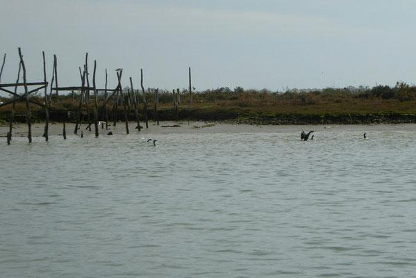 - im Sumpfgebiet gibt es viele Vogelarten