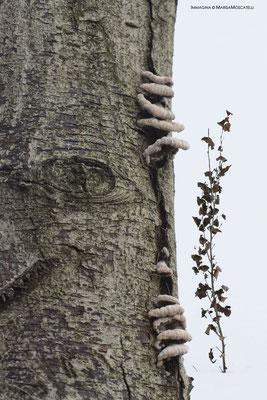 L'infinito - Presenze discrete. Ogni organismo è concepito per varcare quel muro che lo separa dalla concezione Leopardiana dell'infinito.