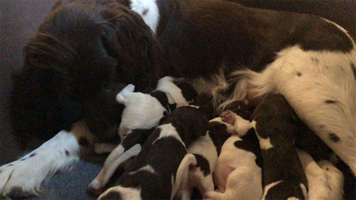 Luna mit 12 Babys