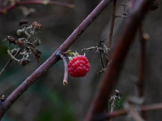 Keine Blätter mehr, aber Früchte