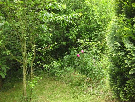 Den Friedhofsbusch rechts im Bild haben wir gerodet - er war ca. 4m hoch und hatte mind. 1 1/2 m im Durchmesser