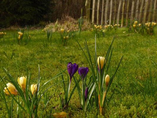 Blumenwiese im unteren Garten