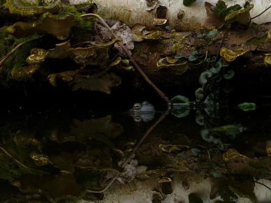 Dabei habe ich die Kamera fast ins Wasser getaucht ...