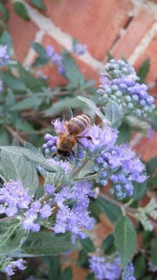 ....und was macht diese Biene hier?