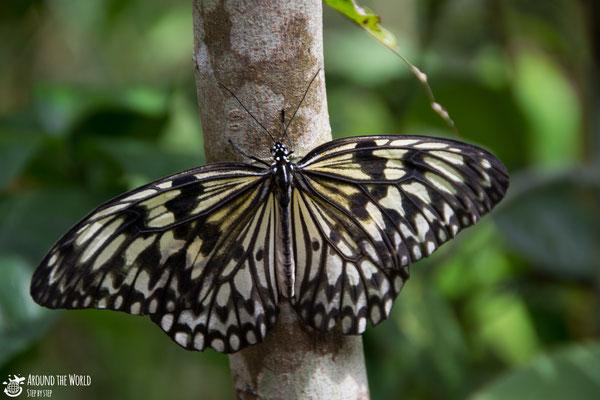 Bohol  Butterfly Conservation Center |aroundtheworldstepbystep.com