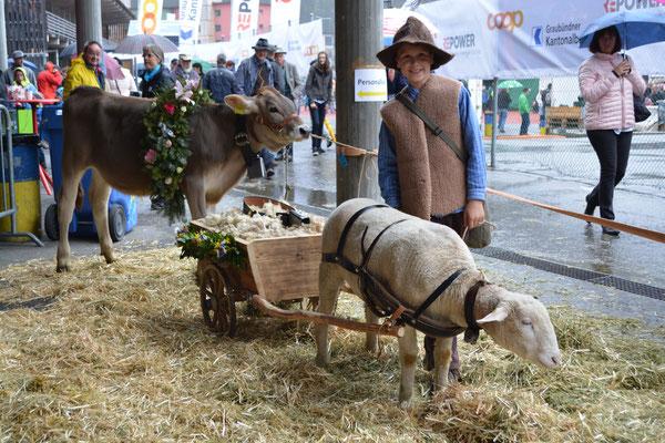 Ursin Bärtsch mit dem Schaf Ursina am Lieblingstier-Wettbewerb