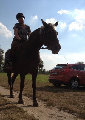 Fanny ist ein feines Pferd mit kräftigen Gängen. Sie geht sowohl auf dem Platz, als auch ins Gelände. Durch eine Krankheit nicht mehr Reitbar.