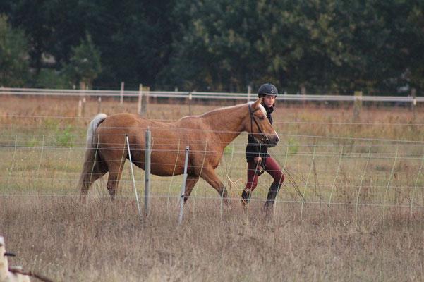 Evi ist ein sehr flottes Pony und liebt es im Gelände zu laufen.  Sie geht fleißig  auf dem Platz und ins Gelände.