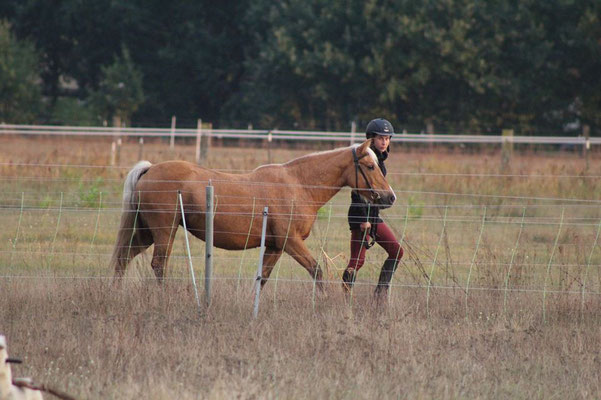 Evi ist ein sehr flottes Pony und liebt es im Gelände zu laufen.  Sie geht fleißig  auf dem Platz und ins Gelände. Wir mussten  uns von ihn leider in 2019 trennen.