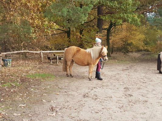 Molle ist ein sehr kräftiges Pferd und hat am liebsten ihre Herde um sich, nur (RB)Anne findet sie so interessant das sie fleißig mitmacht und zuhört.  VERKAUF