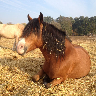Kalota ist ein echt Lustiges Pferd sie Pass auf Menschen gut auf und ist dabei immer lieb. Ihre RB(Sabrina) kümmert sich gut um sie.