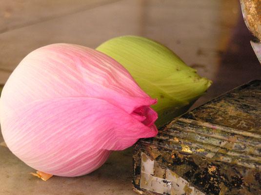 スマトラ沖地震 被災地支援演奏  タイ ナムケン村寺院にて