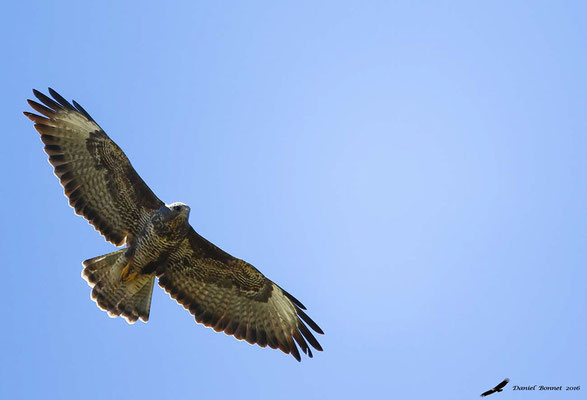 Buse Variable 6