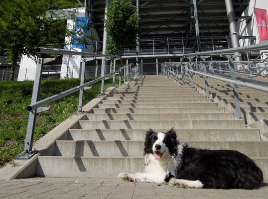 #allemannanbord #hsv Auch Krümel unterstützt den HSV! HSV:Schalke 2:0 23.05.2015