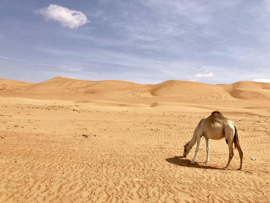 Impressive Desert