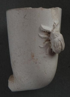 Cat nr 1397 Neogene Doryphora
