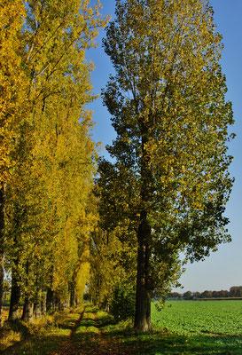 Blättergold