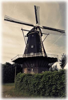 Eine Mühle bei Swartbroek