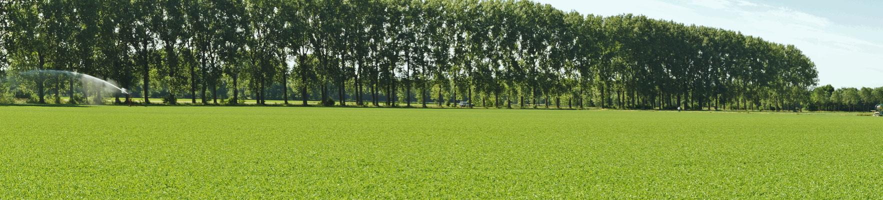Es wird viel bewässert, denn den Böden und Pflanzen dürstet es nach Wasser