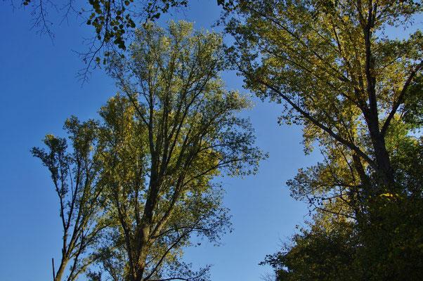 Himmelblau und Blättergelb
