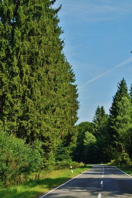 An diesem heißen Tag sorgt der Wald für wohltuende Abkühlung