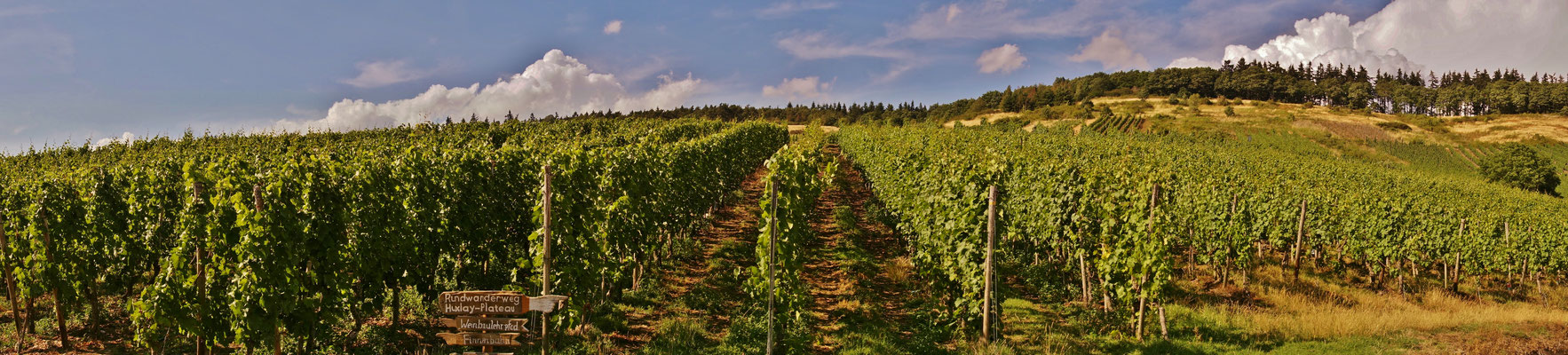 Weinanbau bei Mehring