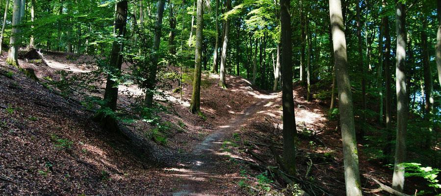 Buchenwaldpfade