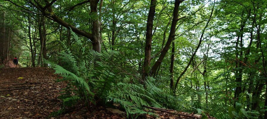 ...in urige Wälder