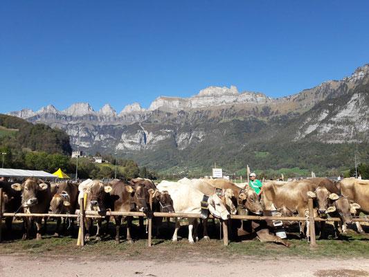 Viehschau Flums