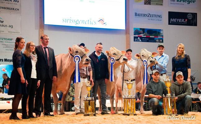 Die drei Championkühe
