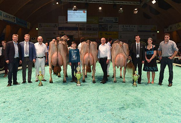 Champion Kühe, Jongleur ELISA (mitte) / Joe HANNA (links) / Jongleur SILVANA (rechts)
