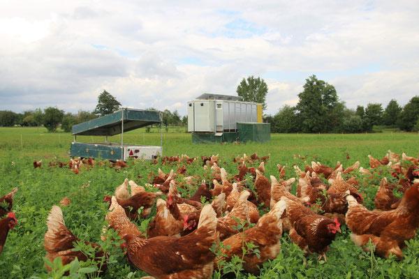 Hühner vor dem Hühnermobil mit Möglichkeit zum Sandbad