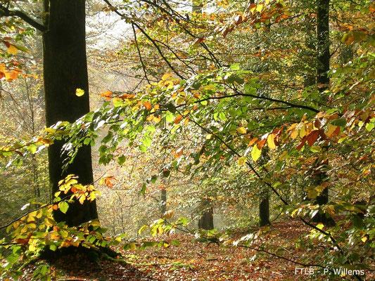 Durbuy en automne : randonnées, gibier, champignon et cor de chasse